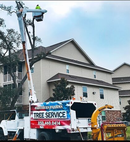 Tree Trimming Services Crestview