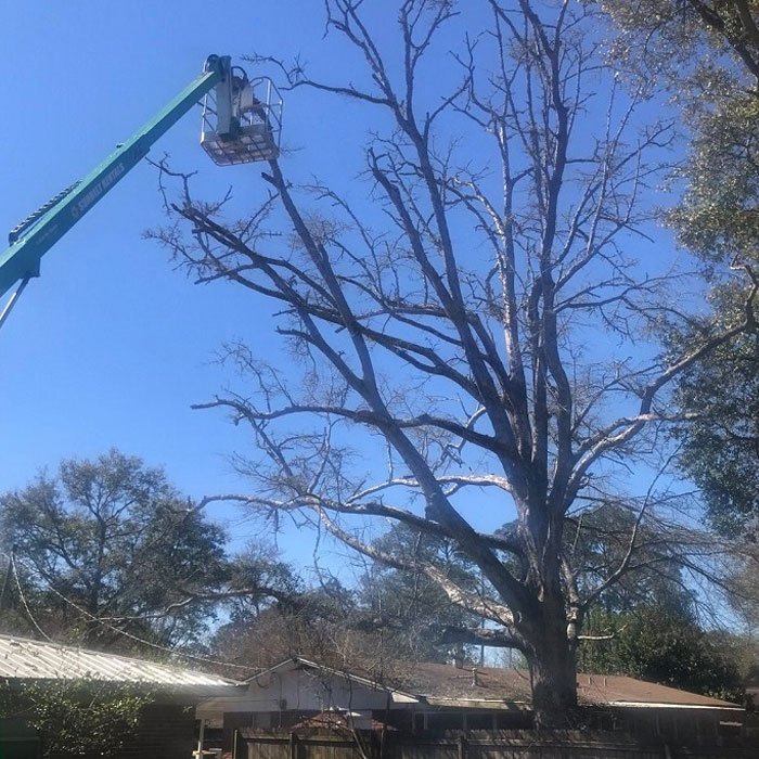 tree trimming service in destine FL