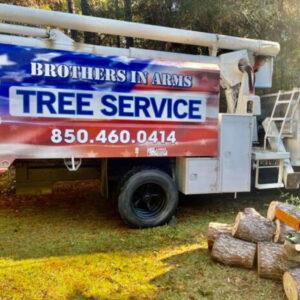 tree removal service destin