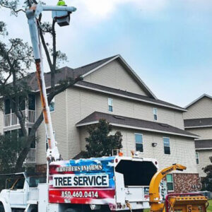tree services in Niceville Fl