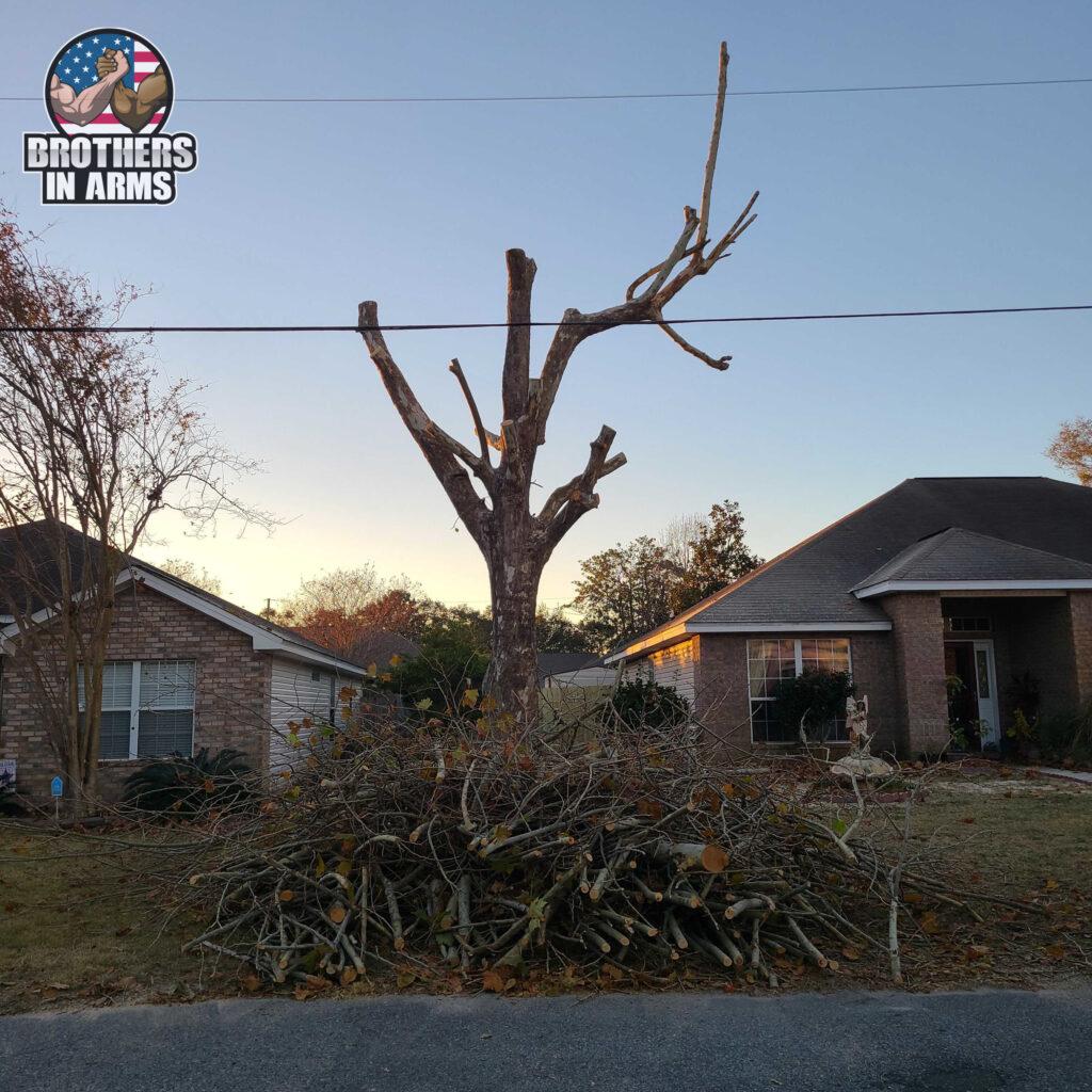 tree servicr santa rosa county