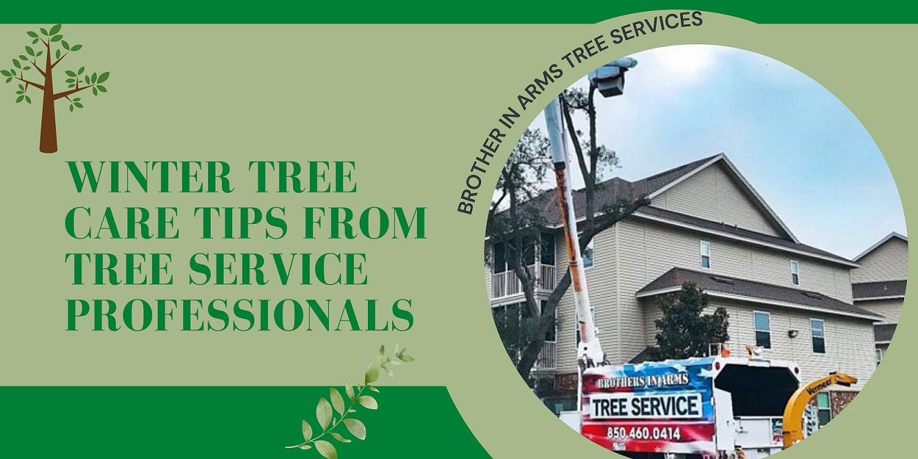 Winter Tree Care Destin