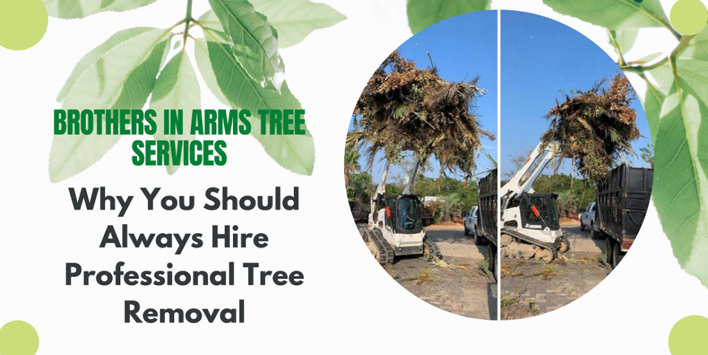 Why You Should Always Hire Professional Tree Removal