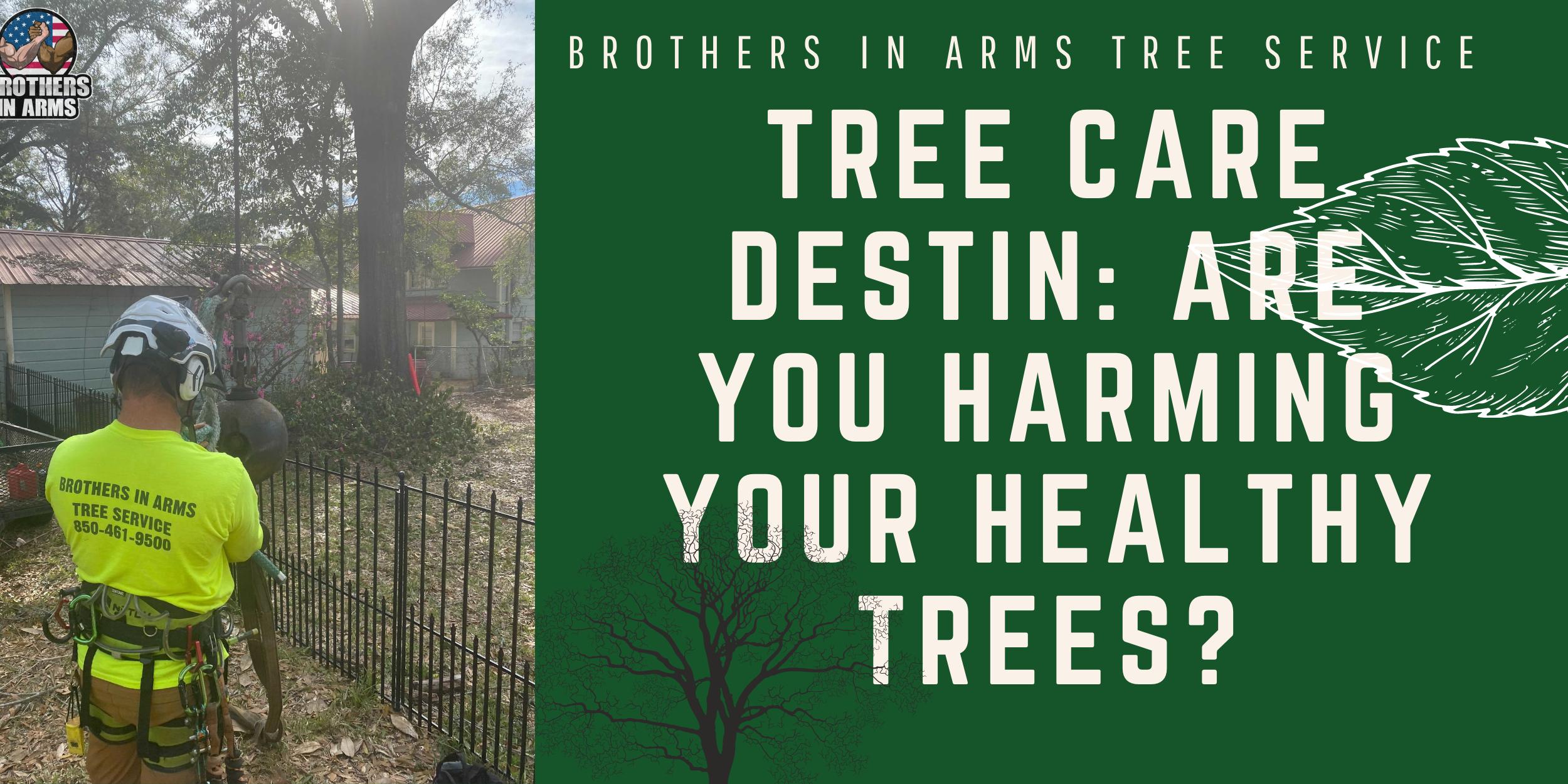 destin tree service