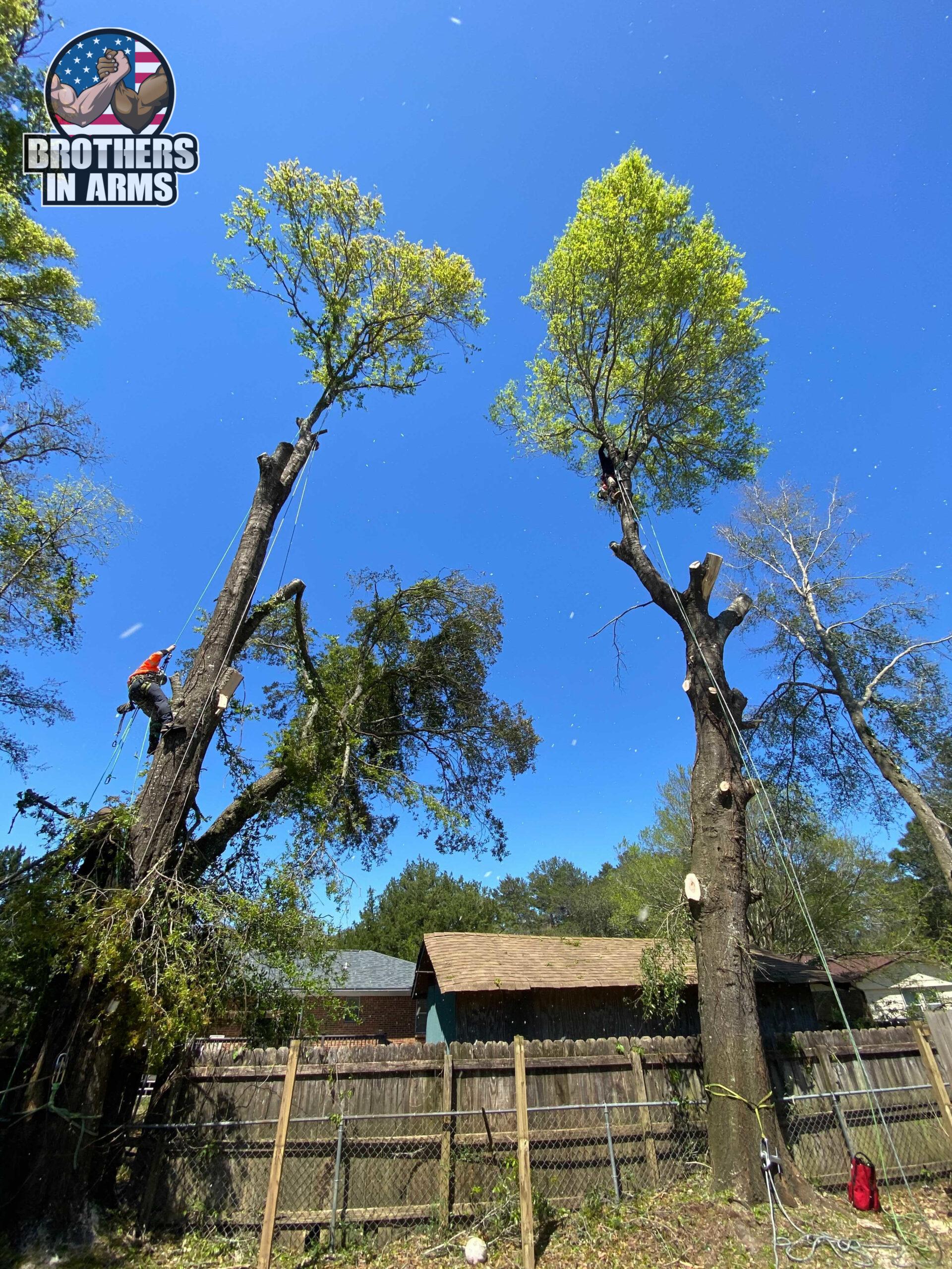 tree trimming service santa rosa county
