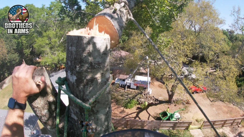fort walton beach tree removal service