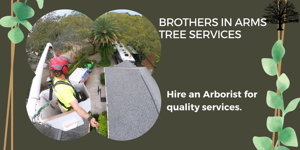 why hire arborists