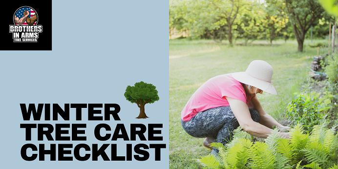 Winter tree care checklist