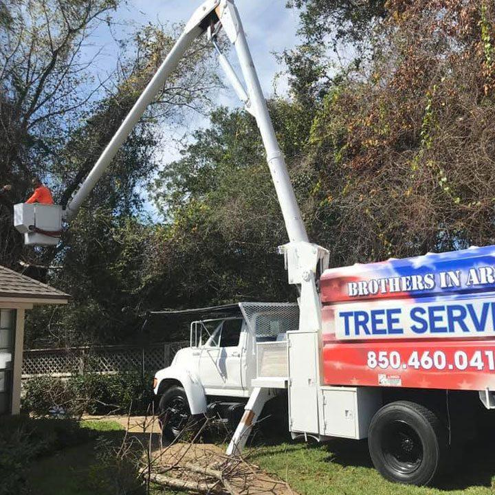 Tree trimming service destin